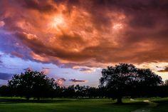 Under a Blood Red Sky. Audubon Park la nuit.