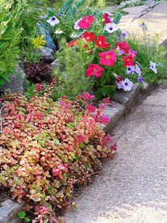 Put sedums on the top of your shopping list if you're looking for a perennial that requires almost no care: http://www.bhg.com/gardening/flowers/perennials/power-perennials/?socsrc=bhgpin041114sedum&page=7