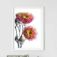 Printable Pink Eucalyptus Blossom Print Downloadable | Etsy Professional Photo Lab, Eucalyptus, Walmart Photos, Plant Art, Floral Wall Art, Living Room Art, Photo Colour, Native Plants, Image Shows
