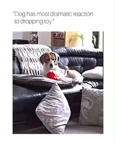 Funny Dog Memes, Funny Animal Memes, Funny Animal Videos, Cute Funny Animals, Funny Animal Pictures, Cute Baby Animals, Funny Cute, Funny Dogs, Cute Dogs