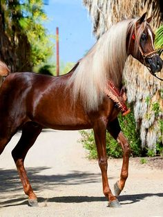 Gorgeous colored horse with a pretty soft mane.