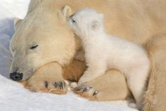 """Keeping my nose warm or whispering; """"wake up, mommy"""""""