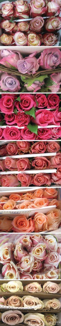 reno valentine's day package