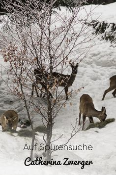 Catherina Zwerger erzählt über Ihre Aufgaben als Jägerin. #kleinwalsertal #visitvorarlberg Natural Wonders, Portrait, Moose Art, Nature, Animals, Animaux, Men Portrait, Animal, Animales