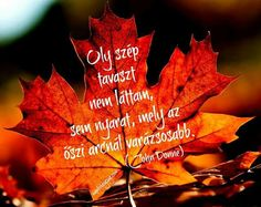Quotes, Movie Posters, Movies, Life, Autumn, Quotations, Films, Fall Season, Film Poster