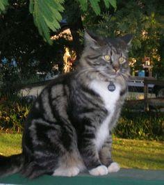 My cat Chessie. Cindy, Napa, California. 8/1/12