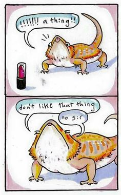 Tagged with , , Funny Looking Cats; My bearded dragon loves cat toys. Animal Jokes, Funny Animal Memes, Cute Funny Animals, Funny Cute, Funny Memes, Hilarious, Cute Comics, Funny Comics, Bearded Dragon Cute