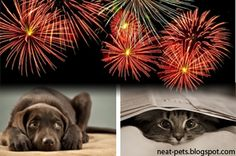 Here's an article we think is worth re-posting! It is not uncommon for pets to experience anxiety or fear during the firework celebrations on July Here are some tips before the fireworks begin: Public Display, David Cameron, Phobias, Pet Health, Medium Art, Fireworks, 4th Of July, Your Pet, Anxiety