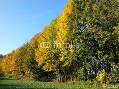 Buntes Herbstlaub vor blauem Himmel am Rande des Teutoburger Wald bei Oerlinghausen in OWL