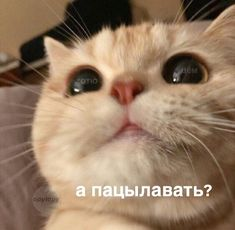 Kitten, Cats, Animals, Cute Kittens, Gatos, Kitty Cats, Animaux, Kitty, Kittens