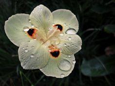 """""""A felicidade é como a gota De orvalho numa pétala de flor Brilha tranquila Depois de leve oscila E cai como uma lágrima de amor."""" Tom Jobim e Vinicius de Moraes"""