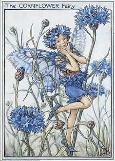 The Cornflower Fairy