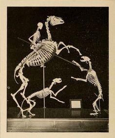 dem bones case study