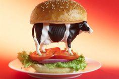 Vegetarianismo en el debate político