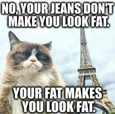 Looking for something amazing which can make you laugh for hours. If you are true lover of cat then you will enjoy a lot here. We sure you that this bundle of funny memes will make your day. Here are 30 Funny Cat Memes eyes. Grumpy Cat Quotes, Funny Grumpy Cat Memes, Cat Jokes, Funny Cats, Funny Sarcastic, Funny Animal Jokes, Funny Animal Pictures, Cute Funny Animals, Funny Memes