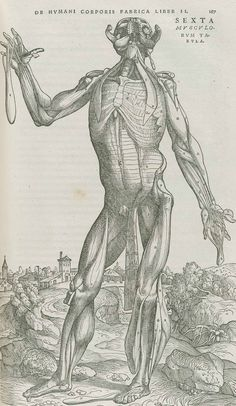 De Humani Corporis Fabrica by Andreas Vesalius--the great and revolutionary work of 1543