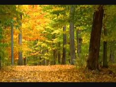 Coldplay - Paradise (autumn music video)