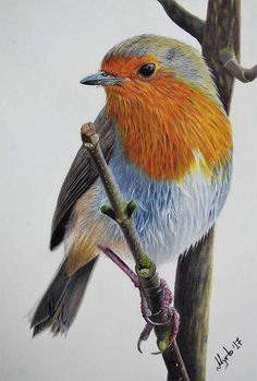 Robin : bird original drawing robin original drawing robin drawing bird Items similar to Original Drawing, Colored Pencil Bird Illustration, Cute Robin inch on Etsy Bird Drawings, Realistic Drawings, Colorful Drawings, Animal Drawings, Drawing Birds, Horse Drawings, Pencil Painting, Color Pencil Art, Color Pencil Drawings