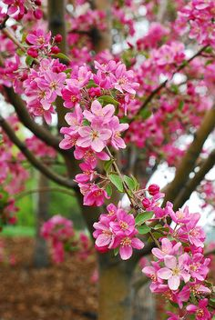 Beautiful Flowers Wallpapers, Beautiful Rose Flowers, Beautiful Flower Arrangements, Amazing Flowers, Beautiful Gardens, Flora Flowers, Flowers Nature, Ikebana, Flor Iphone Wallpaper