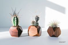 Hey, I found this really awesome Etsy listing at https://www.etsy.com/listing/494940828/geometric-air-plant-succulent-planters