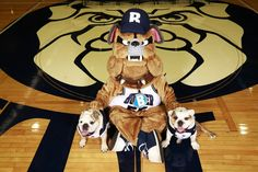 Butler Bulldogs images - - Yahoo Image Search Results