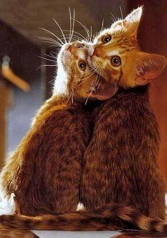 Adorable kittens..!