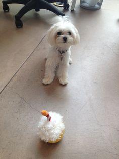 Happy 1st Birthday! #birthday #happybirthday #team #dog #pet #office #EmpowHER