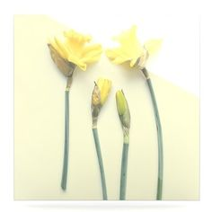 """East Urban Home Tulip 'Springtime Yellow' Photographic Print on Metal Size: 10"""" H x 10"""" W x 1"""" D"""