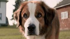 Regardez la bande annonce du film Mes vies de chien (Mes vies de chien Bande-annonce VO). Mes vies de chien, un film de Lasse Hallström