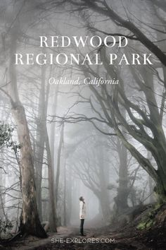 Redwood Regional Park in California by Vivian Chen