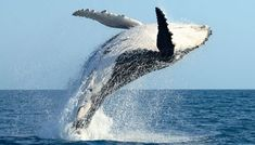 #Spain's government agrees to whale corridor to protect species' migratory route #Andalucia #Environment