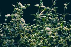 Welcome to the jungle. by void1  IFTTT 500px