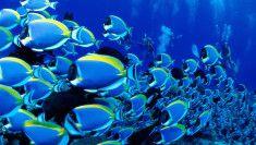 rybyčky HD tapeta
