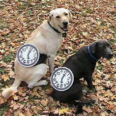 PetsLady's Pick: Funny Watch Dog Costumes Of The Day ... see more at PetsLady.com ... The FUN site for Animal Lovers