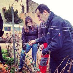 Els alumnes de Grau Superior i Grau Mig han anat de poda a Oller del Mas. #cellers #bodegas #OllerdelMas #ESHOB #alumnes #vinyes #vinos #vins #enología #sumiller #sommelier