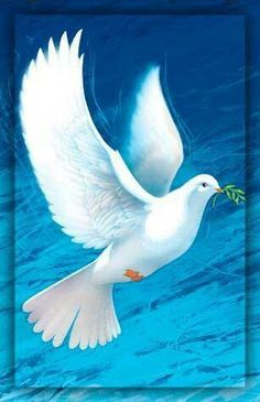 Angels amongst us - Angel Poems - Angel Blessings - Angels - Angel Prayers Mary Jac Pretty Birds, Beautiful Birds, Beautiful Horses, Dove Pictures, Jesus Pictures, Peace Dove, Peace Art, Christian Images, White Doves