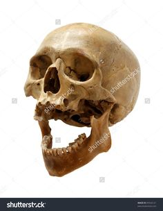 Skull Of The Person On A White Background. Стоковые фотографии 95532121 : Shutterstock