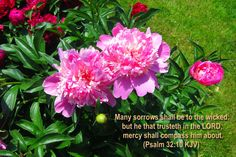 Psalms (KJV) ~ Many sorrows shall be to the wicked: but he that trusteth in the LORD, mercy shall compass him about. Praise And Worship Songs, Praise God, Verses About Love, Christian Verses, Bible Verse Wallpaper, Favorite Bible Verses, Gods Grace, Scripture Verses, Word Of God