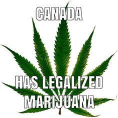 Canada has legalized marijuana in You can now buy weed online visit our website for more info Indica Strains, Mood Enhancers, Buy Weed Online, Types Of Plants, Cactus Plants, Canada, Blog, Meme