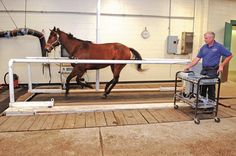 Are High-Speed Treadmills Safe for Horses?