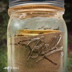 Mason Jar Ant Farm