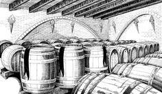 Cellar sketch done for a craft beer label. The sketch was done using a Wacom tablet in Photoshop.