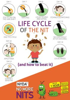 Beating nits naturally