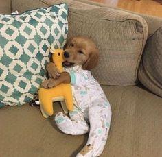 Golden Retriever Puppies Cute puppy snuggle cuddle dress up pajamas pjs toy stuffed golden retriever couch Baby Animals Super Cute, Cute Little Animals, Cute Funny Animals, Funny Dogs, Funny Humor, Puppies In Pajamas, Cute Dogs And Puppies, Baby Dogs, Doggies