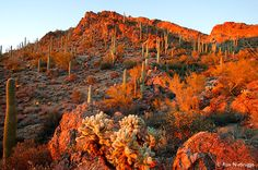 Stock photos of Sonoran Desert, Tucson Mountain County Park, Tucson, Arizona. Photos by Ron Niebrugge. Places Ive Been, Places To Visit, Sonora Desert, Living In Arizona, Mountain Park, Tucson Arizona, Arizona Usa, Arizona State, County Park