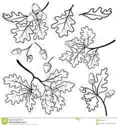 Buy Oak Branches with Acorns, Outline by OK-SANA on GraphicRiver. Set oak branches with leaves and acorns, black contour on white background. Vector EPS 8 plus AI CS 5 plus high-quali. Oak Tree Silhouette, Tree Silhouette Tattoo, Oak Leaves, Tree Leaves, Oak Leaf Tattoos, Oak Tree Drawings, Mini Mundo, Illustration Inspiration, Leaf Illustration
