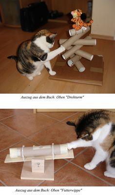grasinsel aus rasen f r wohnungskatzen seite 4 katzen. Black Bedroom Furniture Sets. Home Design Ideas