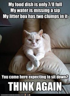 My food dish is only 7/8 full/My water is missing a sip/My litter box has two clumps in it/You came here expecting to sit down?/THINK AGAIN