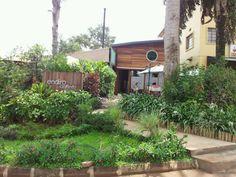 Endiro Coffee in Kisimenti - Kampala Uganda Uganda, Coffee, Kaffee, Cup Of Coffee