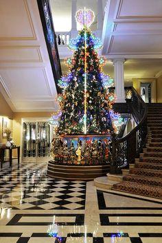 Christmas Tree Wow And Wonder
